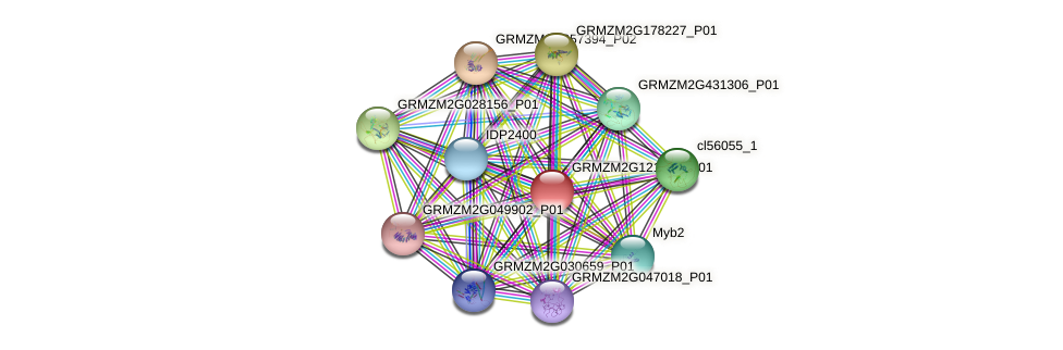 GRMZM2G121354_P01 protein (Zea mays) - STRING interaction network