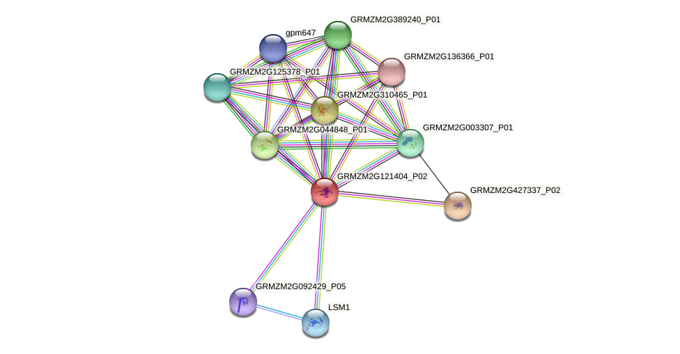 Zm.22395 protein (Zea mays) - STRING interaction network