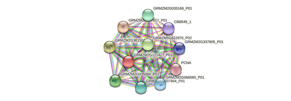 GRMZM2G121427_P01 protein (Zea mays) - STRING interaction network