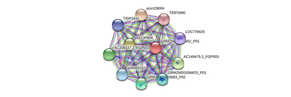 GRMZM2G121452_P01 protein (Zea mays) - STRING interaction network