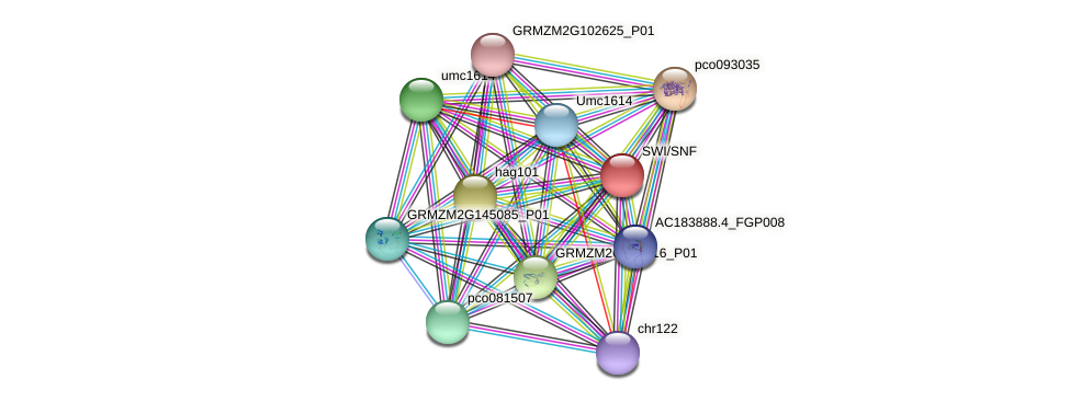 GRMZM2G121510_P01 protein (Zea mays) - STRING interaction network