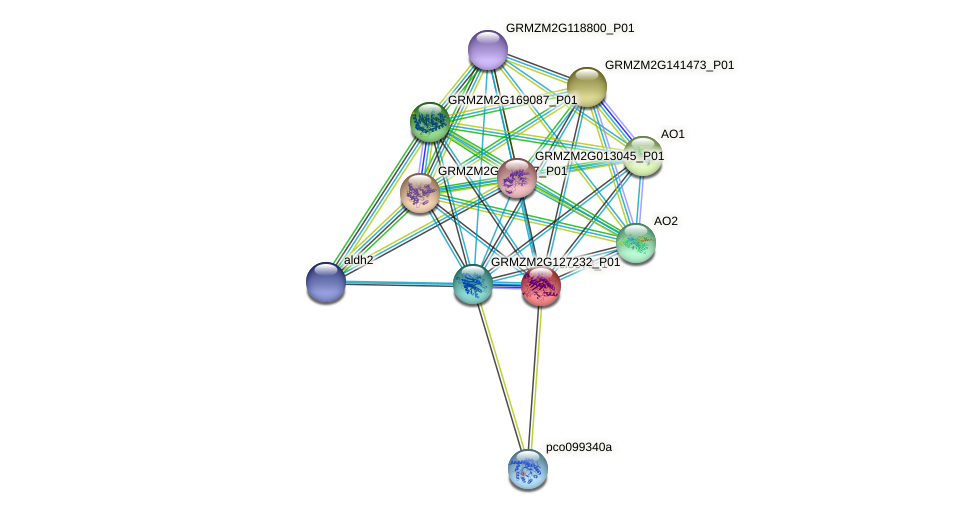 cl5678_1 protein (Zea mays) - STRING interaction network