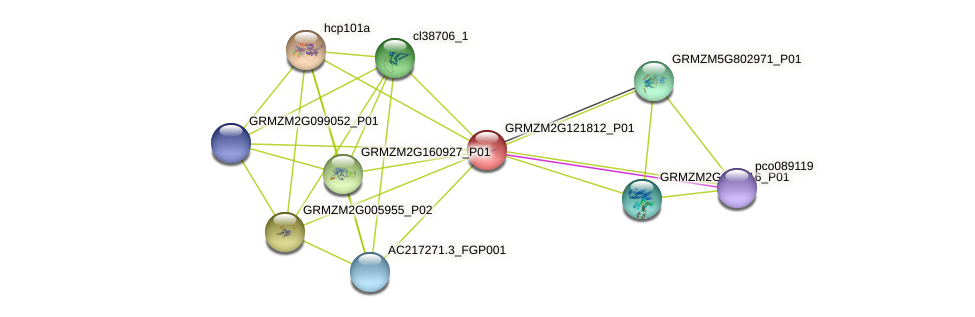 GRMZM2G121812_P01 protein (Zea mays) - STRING interaction network