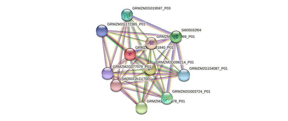 GRMZM2G121840_P01 protein (Zea mays) - STRING interaction network