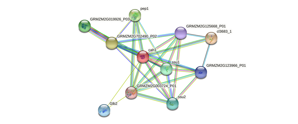 GRMZM2G121878_P03 protein (Zea mays) - STRING interaction network