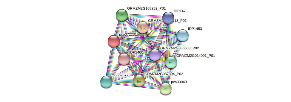 pco072231b protein (Zea mays) - STRING interaction network