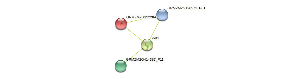 Zm.78275 protein (Zea mays) - STRING interaction network