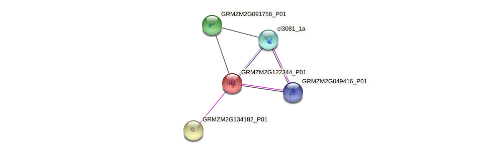 GRMZM2G122344_P01 protein (Zea mays) - STRING interaction network