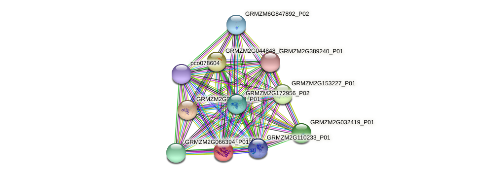 pco076082 protein (Zea mays) - STRING interaction network