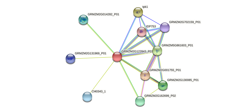 GRMZM2G122843_P01 protein (Zea mays) - STRING interaction network