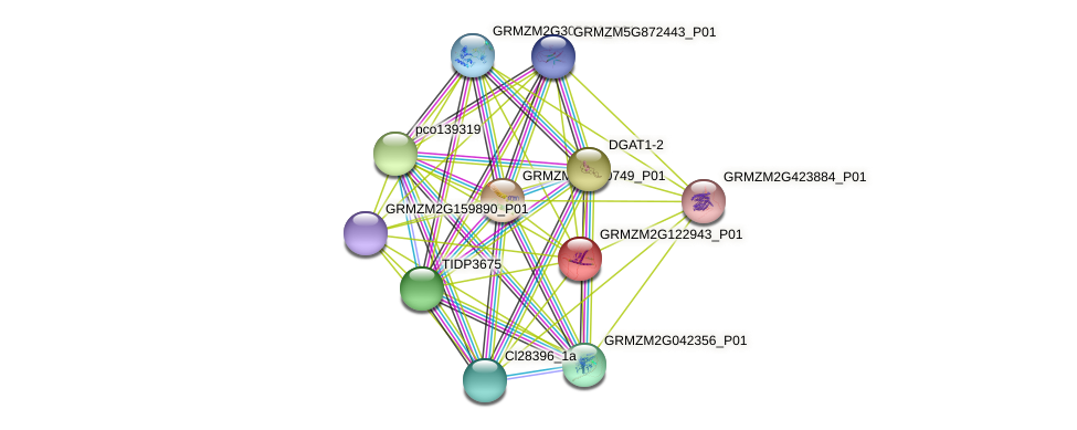GRMZM2G122943_P01 protein (Zea mays) - STRING interaction network