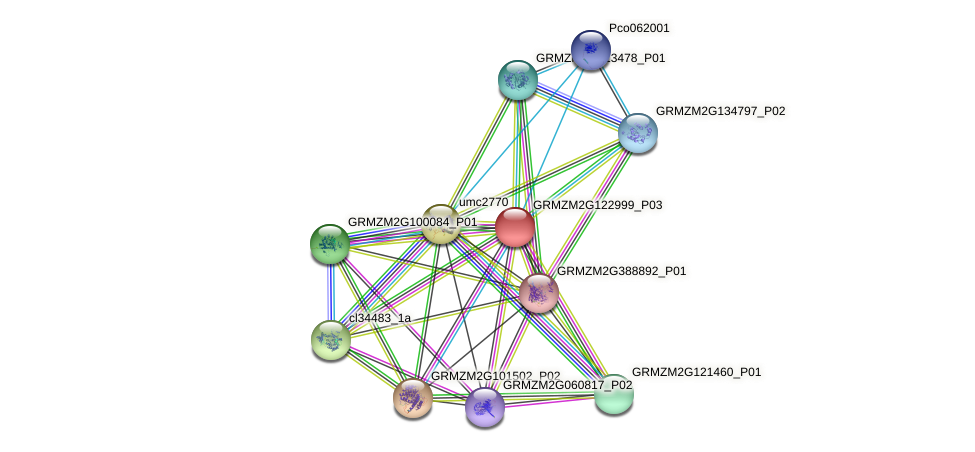 GRMZM2G122999_P01 protein (Zea mays) - STRING interaction network