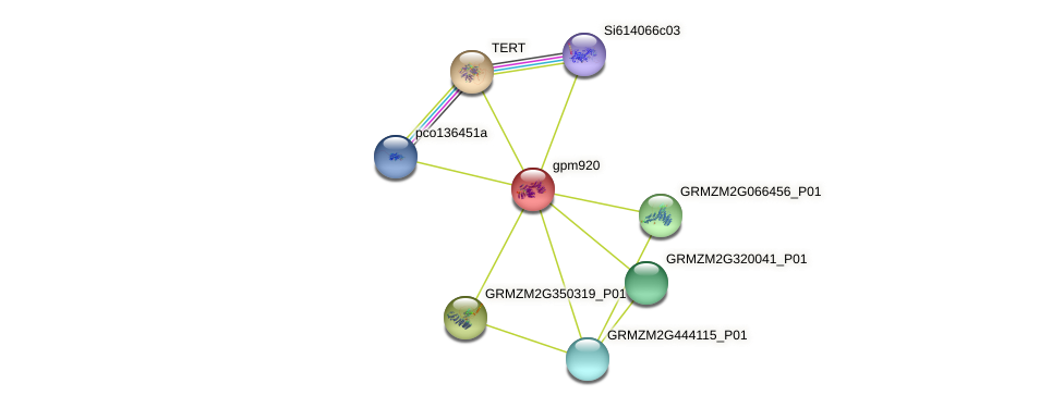 gpm920 protein (Zea mays) - STRING interaction network