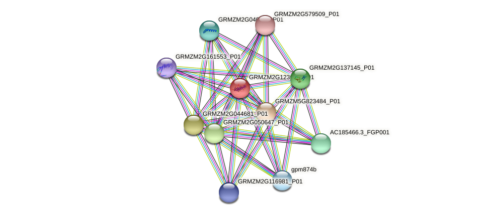 GRMZM2G123016_P01 protein (Zea mays) - STRING interaction network