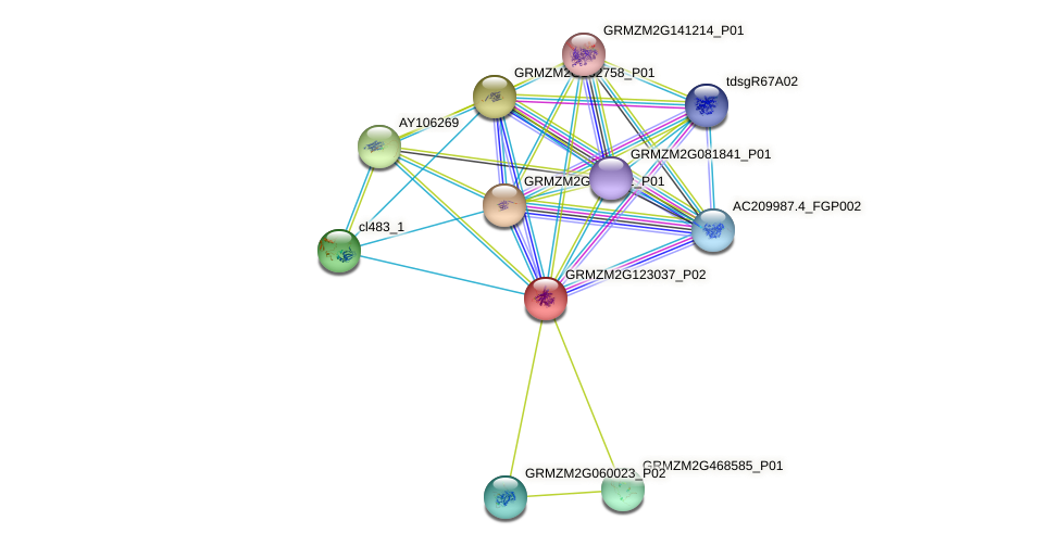 GRMZM2G123037_P02 protein (Zea mays) - STRING interaction network