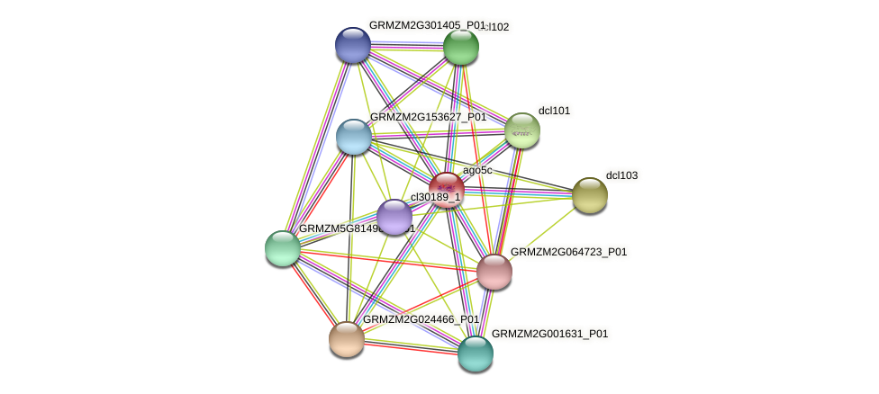 GRMZM2G123063_P01 protein (Zea mays) - STRING interaction network