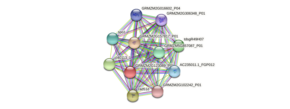 GRMZM2G123089_P01 protein (Zea mays) - STRING interaction network