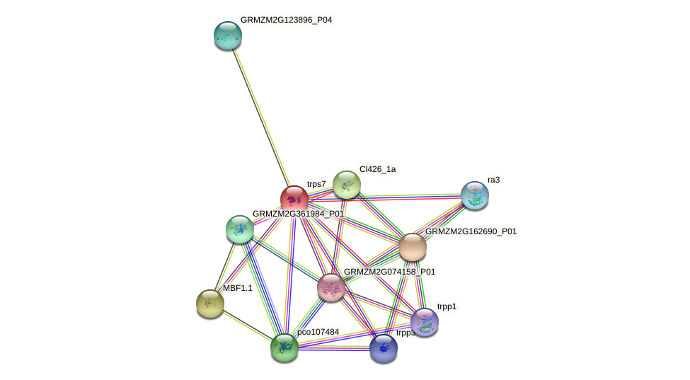 GRMZM2G123277_P01 protein (Zea mays) - STRING interaction network