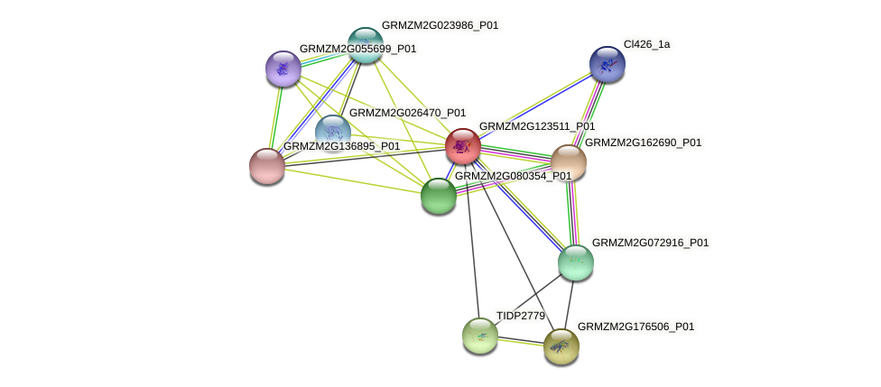 GRMZM2G123511_P01 protein (Zea mays) - STRING interaction network