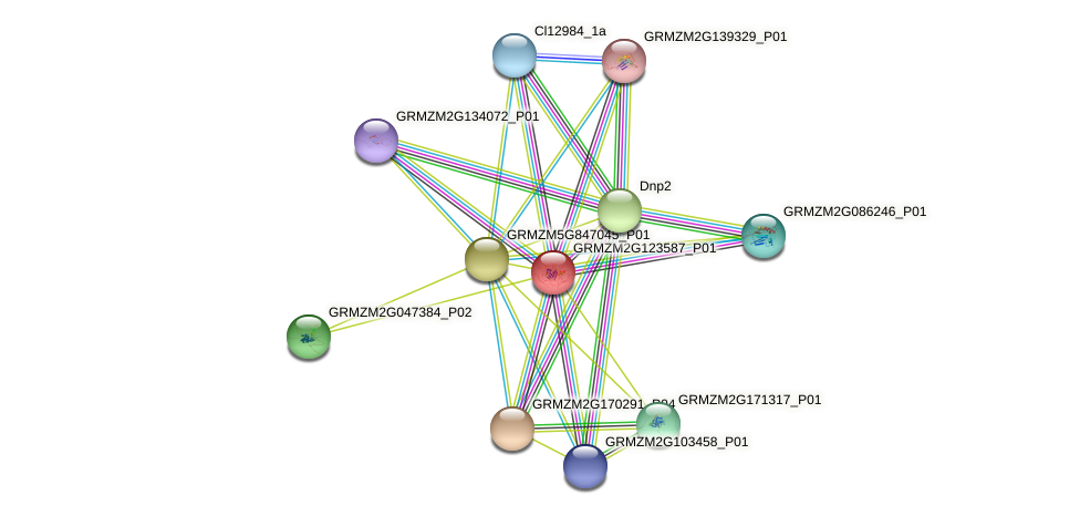 GRMZM2G123587_P01 protein (Zea mays) - STRING interaction network
