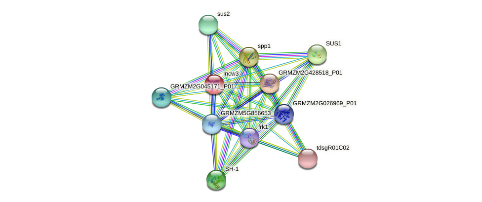 incw3 protein (Zea mays) - STRING interaction network
