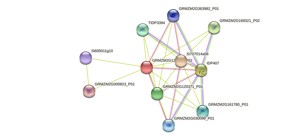 GRMZM2G123732_P02 protein (Zea mays) - STRING interaction network