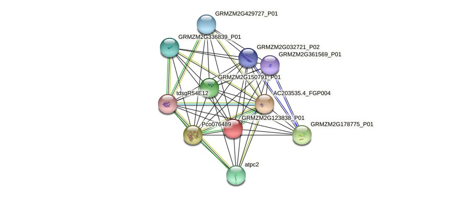 GRMZM2G123838_P01 protein (Zea mays) - STRING interaction network