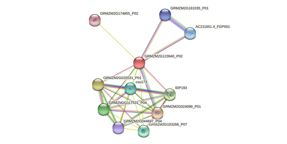 GRMZM2G123940_P02 protein (Zea mays) - STRING interaction network