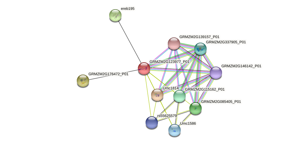 GRMZM2G123977_P01 protein (Zea mays) - STRING interaction network