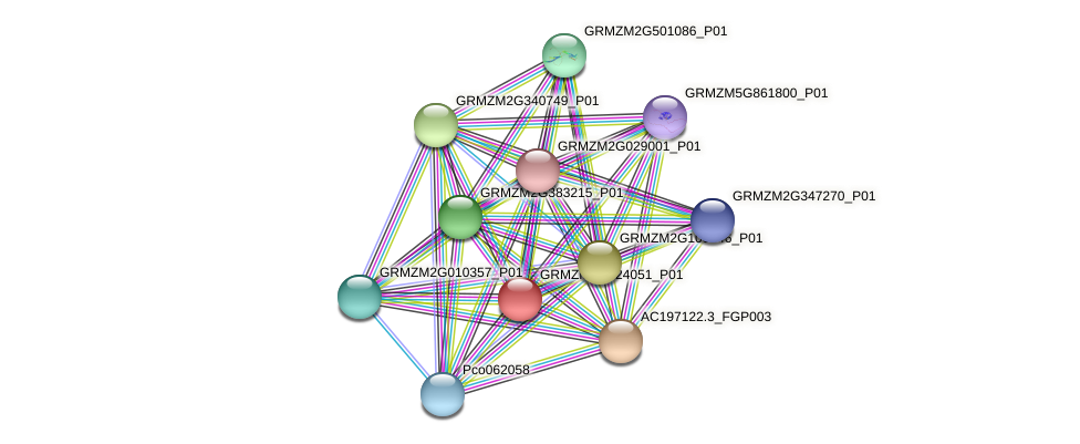 GRMZM2G124051_P01 protein (Zea mays) - STRING interaction network