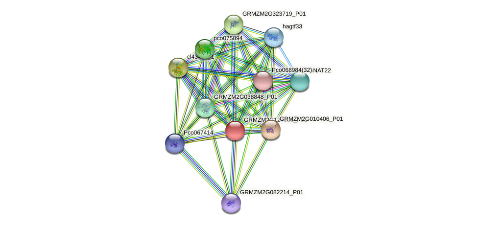 GRMZM2G124059_P01 protein (Zea mays) - STRING interaction network