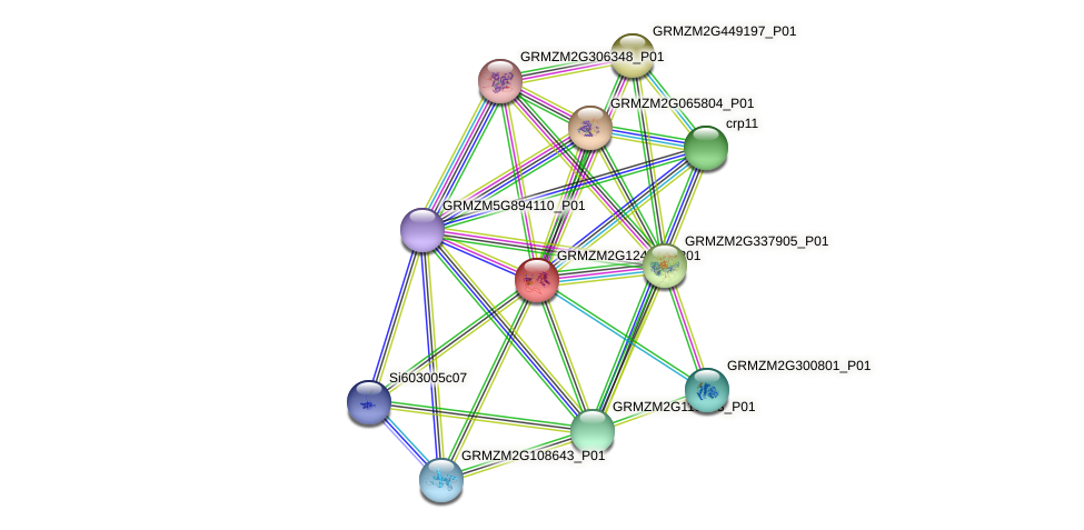 GRMZM2G124301_P01 protein (Zea mays) - STRING interaction network