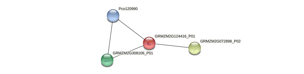 Zm.7881 protein (Zea mays) - STRING interaction network