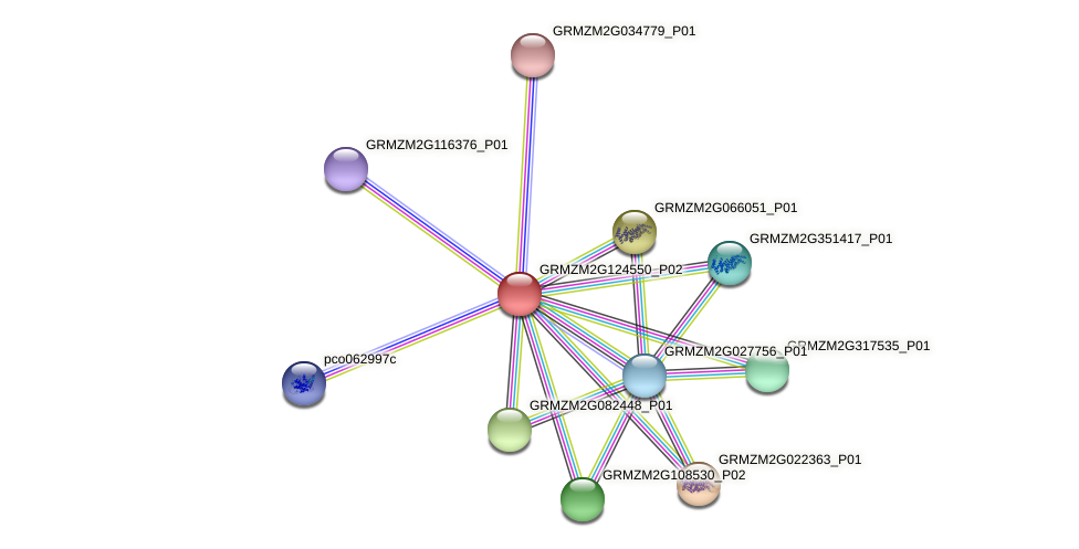 GRMZM2G124550_P02 protein (Zea mays) - STRING interaction network
