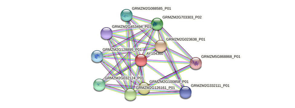 AY104360 protein (Zea mays) - STRING interaction network