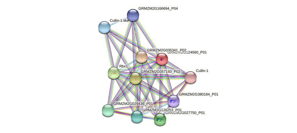 GRMZM2G124560_P01 protein (Zea mays) - STRING interaction network