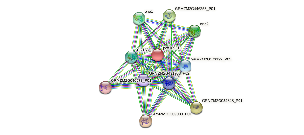 pco109318 protein (Zea mays) - STRING interaction network