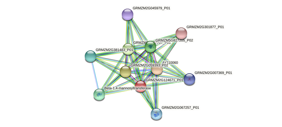 GRMZM2G124671_P01 protein (Zea mays) - STRING interaction network