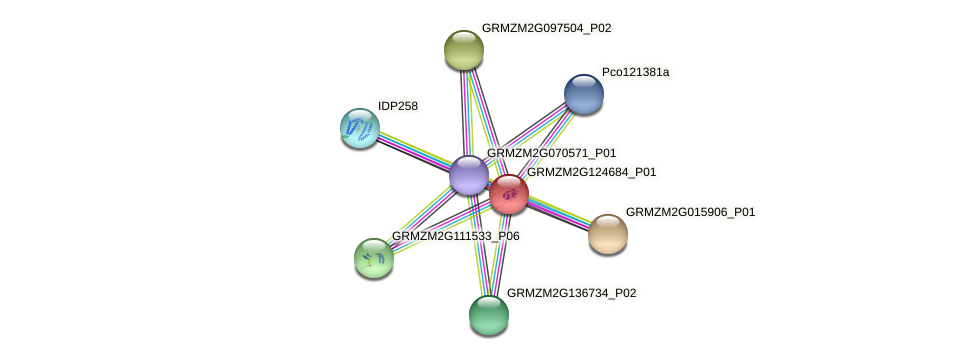 GRMZM2G124684_P01 protein (Zea mays) - STRING interaction network