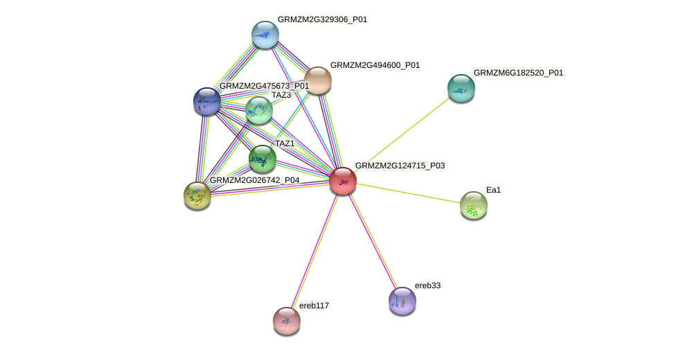 MYB64 protein (Zea mays) - STRING interaction network
