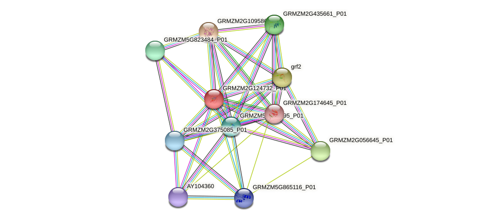 GRMZM2G124732_P01 protein (Zea mays) - STRING interaction network