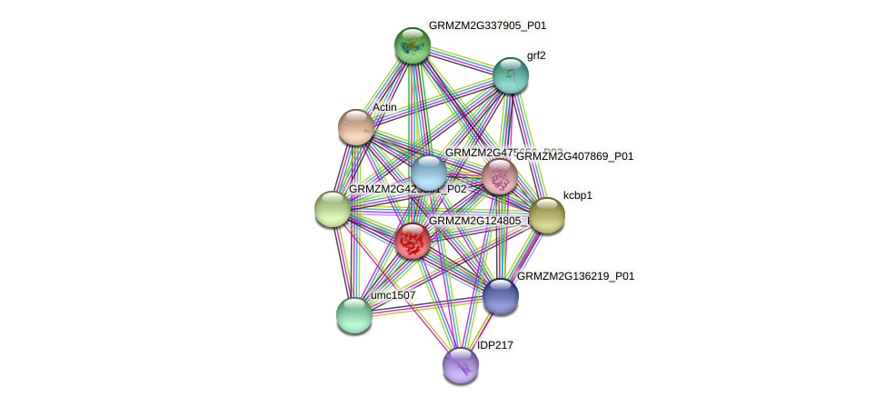 GRMZM2G124805_P01 protein (Zea mays) - STRING interaction network
