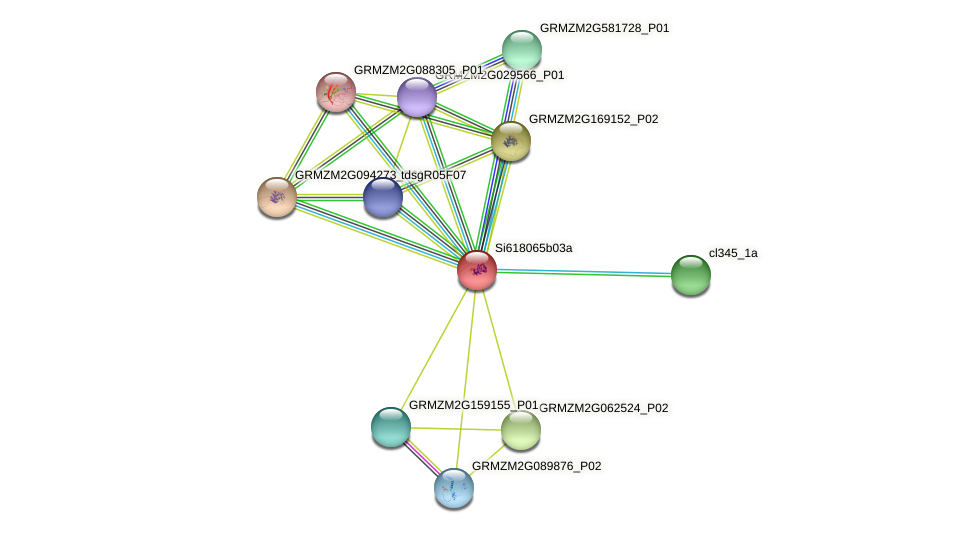 GRMZM2G124820_P01 protein (Zea mays) - STRING interaction network