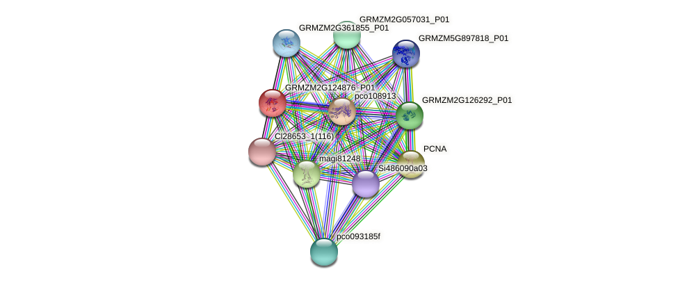 GRMZM2G124876_P01 protein (Zea mays) - STRING interaction network