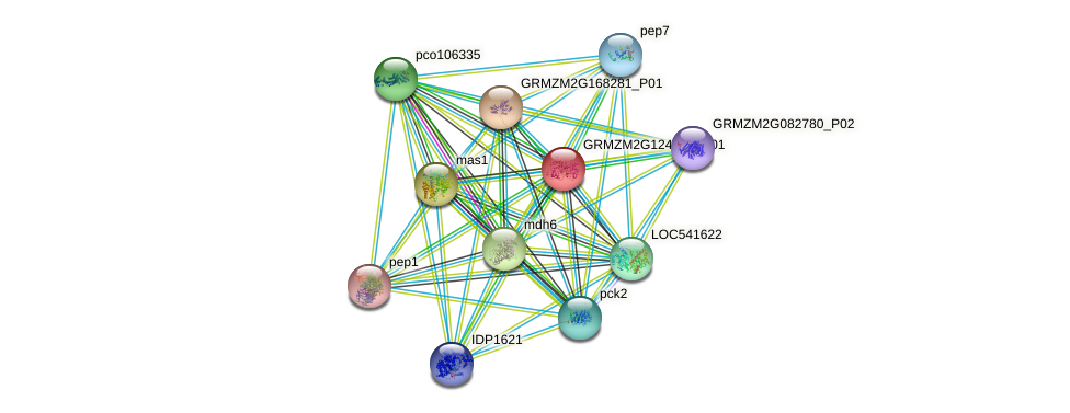 GRMZM2G124919_P01 protein (Zea mays) - STRING interaction network