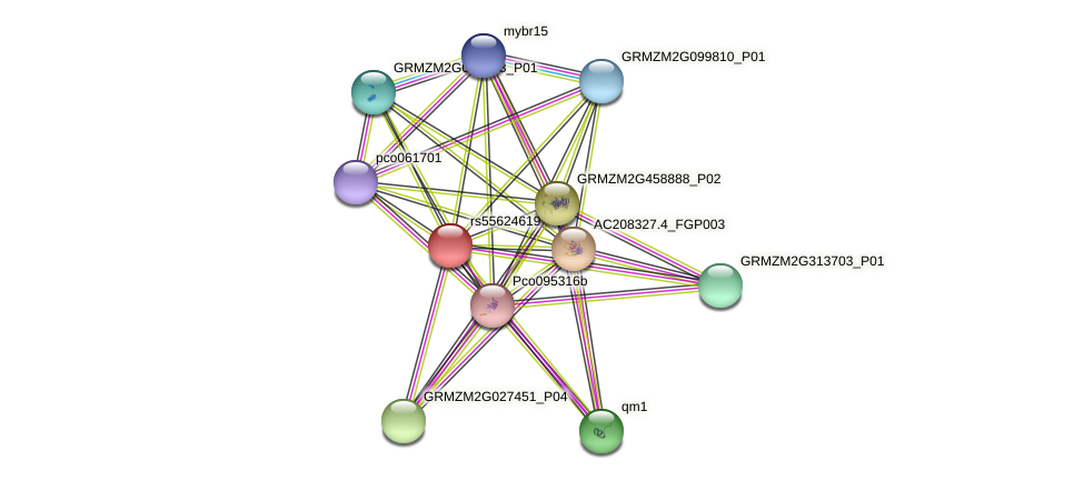 GRMZM2G124975_P01 protein (Zea mays) - STRING interaction network
