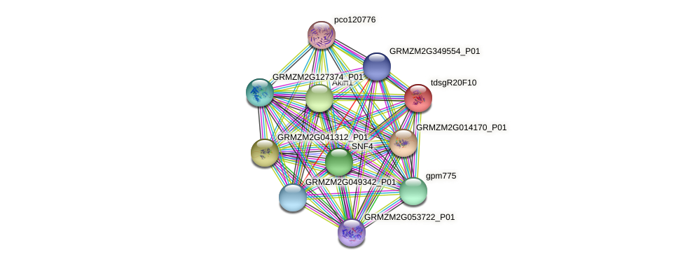 GRMZM2G125001_P01 protein (Zea mays) - STRING interaction network