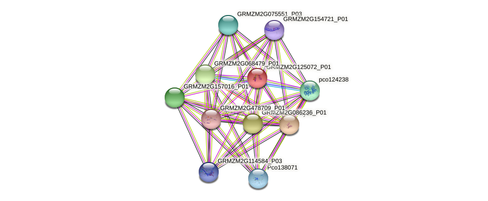 GRMZM2G125072_P01 protein (Zea mays) - STRING interaction network