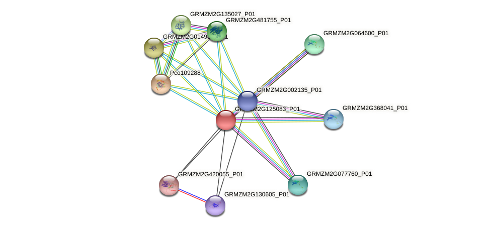 GRMZM2G125083_P01 protein (Zea mays) - STRING interaction network