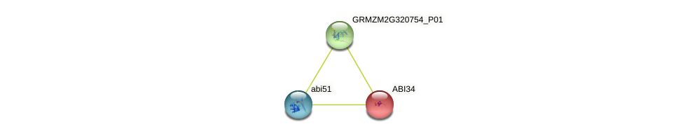 ABI34 protein (Zea mays) - STRING interaction network